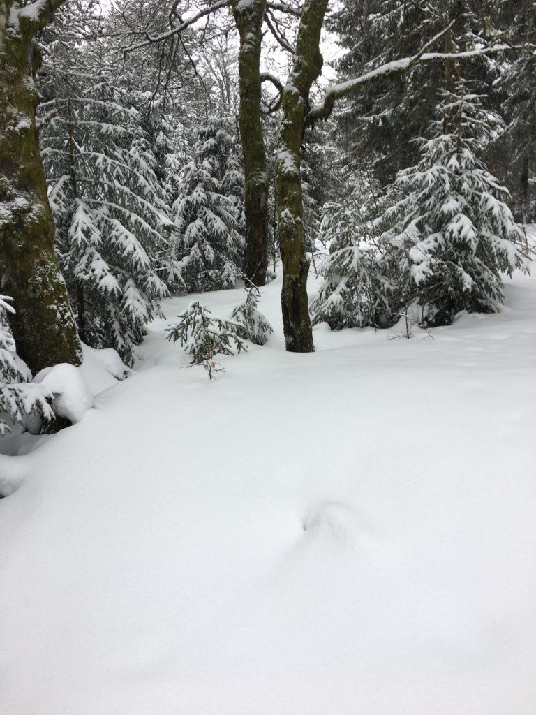 sortie en raquettes à neige paysage enneigé